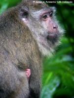 10_monyet