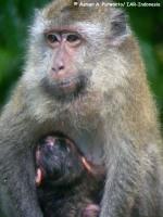 11_monyet