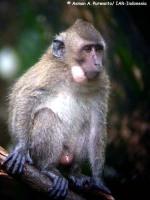 12_monyet