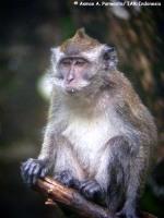 14_monyet