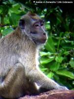 15_monyet