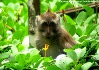 16_monyet