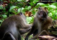 17_monyet