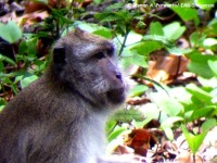 18_monyet