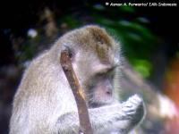 1_monyet