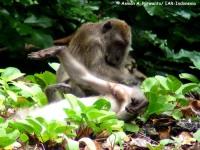 20_monyet