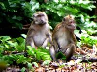 21_monyet