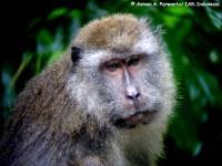 2_monyet