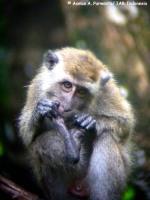 4_monyet