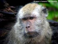 5_monyet