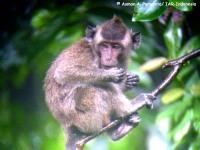 6_monyet