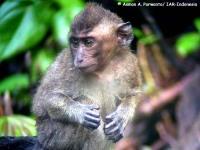 7_monyet