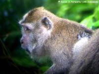 8_monyet