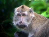 9_monyet