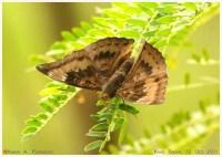 Butterflies_Nymphalidae_151011_aap1
