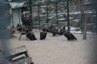 vulture di rescue center