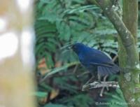 Ciung-batu Kecil merupakan burung yang umum mengunjungi lokasi TPR
