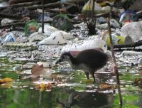 Juvenile , Lembah, Yogyakarta 13.10.13