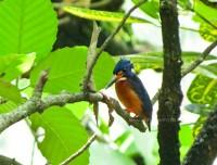 Bogor Botanical Garden, West Java, Indonesia 02.3.13
