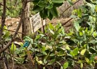 Small-blue Kingfisher, Mangkang Wetan, 15.12.12