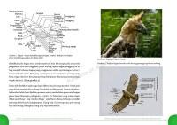 Buku Raptor BBKSDA Jatim-topografi