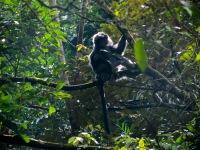 Gunung Merapi National Park, 2012