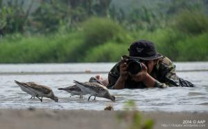 Bukti otentik kalau burungnya sangat bersahabat. Delta Progo 23.11.14