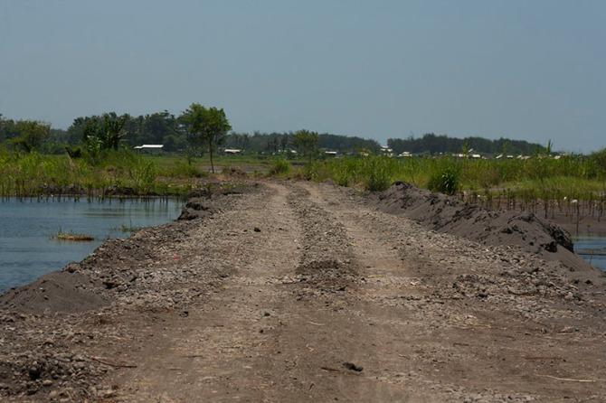 Kanan kiri jalan baru ini adalah tanaman mangrove yang masih tampak baru, Trisik 15.02.15